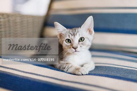 Tabby kitten lying down on sofa