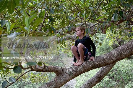 Boy sitting in tree and gazing