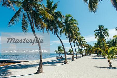 Beach with palm trees, Florida Keys, Florida, USA