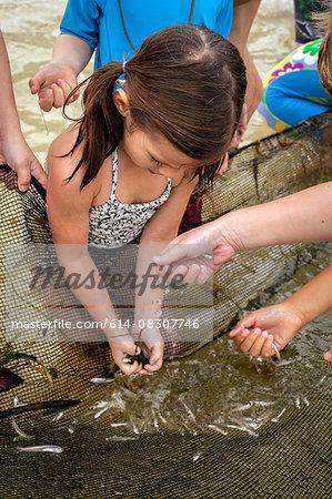 High angle view of girl collecting small fish from fishing net, Sanibel Island, Pine Island Sound, Florida, USA