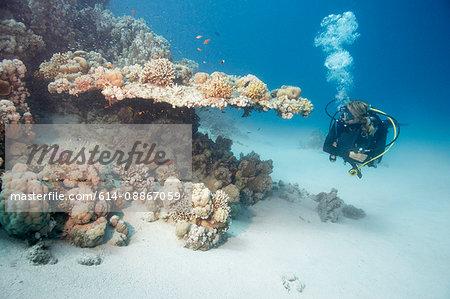 Diver beside reef
