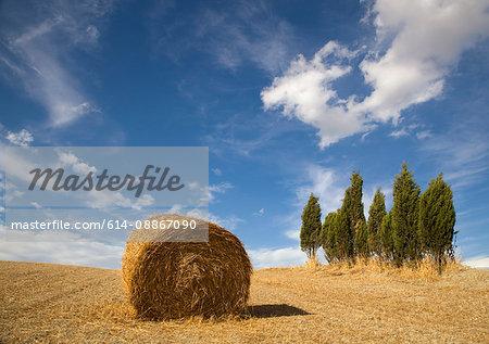 Tuscan landscape, hay bale, cypress tree