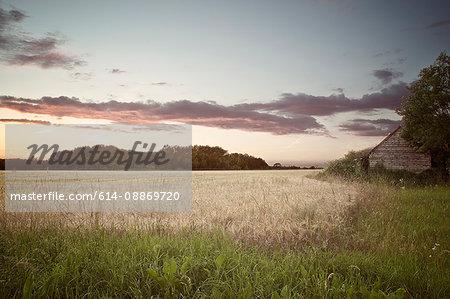 Dried grass in rural field