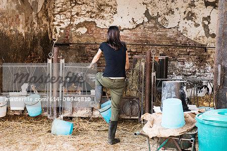 Rear view of female farmer looking at calves on organic dairy farm