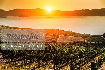 Farmland on coast by sea at sunset, Adamovec, Grad Zagreb, Croatia, Europe