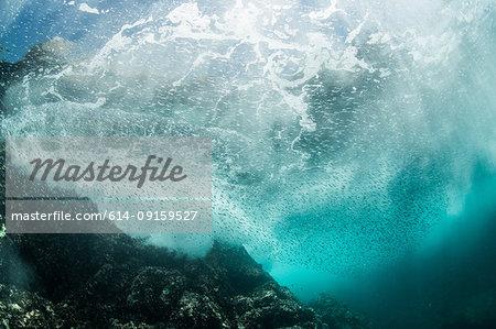 Silverside sardines swimming close to wave breakers, Puerto Vallarta, Jalisco, Mexico
