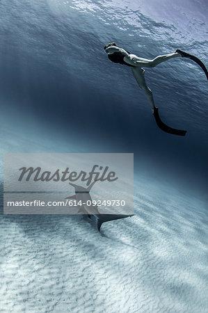 Underwater view of great hammerhead shark and female scuba diver, Alice Town, Bimini, Bahamas