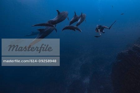 Man diving with dolphins, Revillagigedo Islands, Socorro, Baja California, Mexico