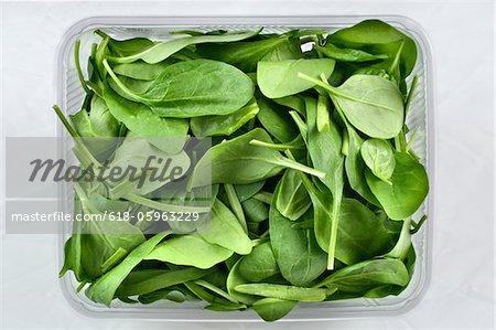 Soncino Salad