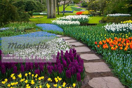 Landscape with tulips Keukenhof Gardens Holland