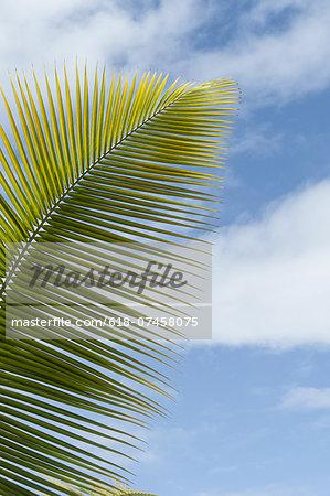 Tropical Leaf, Pigeon Point, Tobago