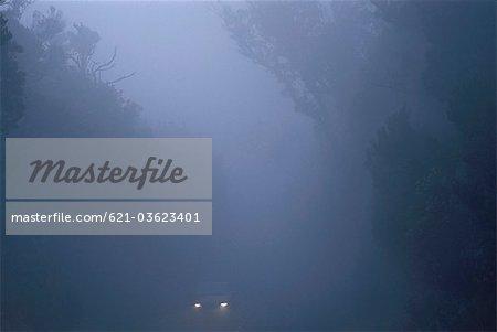 Car in foggy forest, La Gomera island