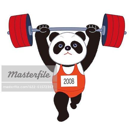 Panda Performing The Clean Jerk Stock Photo Masterfile