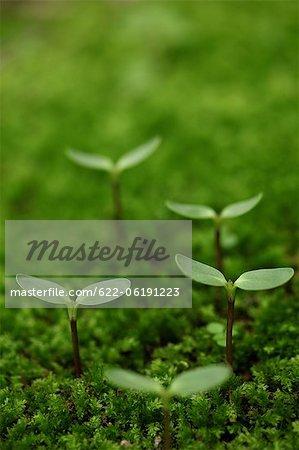 Saplings In Moss, Green
