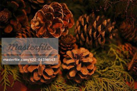 Close up of pine cones