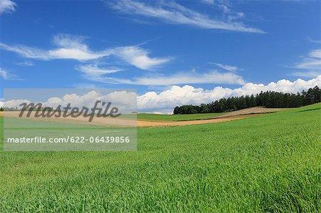 Grassland and blue sky with clouds, Hokkaido