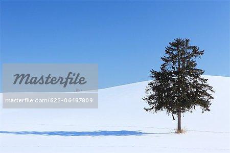 Tree and snow in Furano, Hokkaido