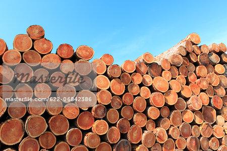 Wood logs and sky