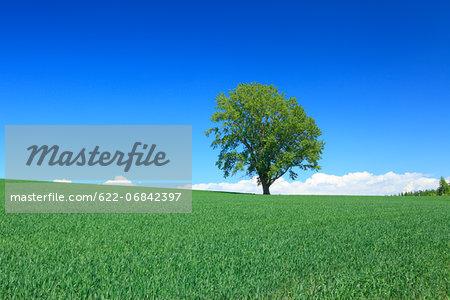 Grassland trees and sky, Hokkaido