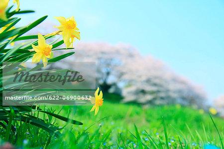 Tussock flowers