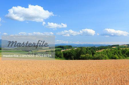 Early summer in the countryside, Hokkaido