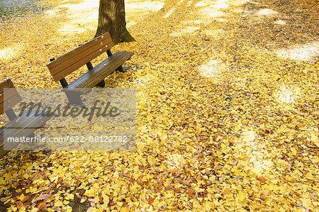 Fallen leaves in a city park