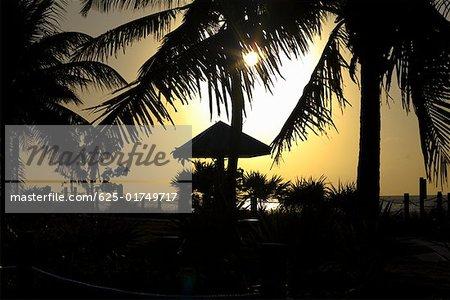 Silhouette of palm trees at dusk, White Street Pier, Key West, Florida, USA