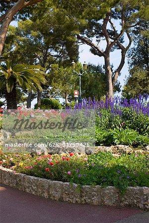 Plants and trees in a garden, Monte Carlo, Monaco
