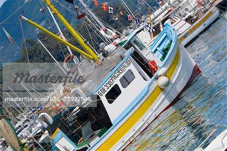 Boats moored at a harbor, Italian Riviera, Santa Margherita Ligure, Genoa, Liguria, Italy