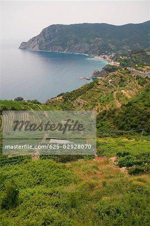 High angle view of cultivated fields on a hill, Mar Ligure, Cinque Terre, Italian Riviera, Cinque Terre National Park, Vernazza, La Spezia, Liguria, Italy