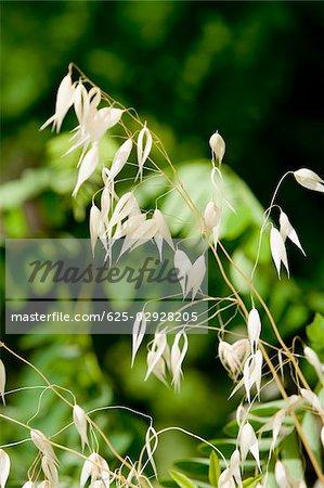 Close-up of a plant, La Spezia, Liguria, Italy