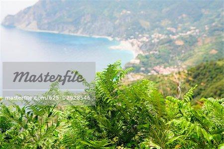 Close-up of a tree top with a sea in the background, Ligurian Sea, Italian Riviera, Monterosso al Mare, Cinque Terre, La Spezia, Liguria, Italy