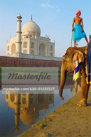 Low angle view of an elephant handler standing on an elephant, Taj Mahal, Agra, Uttar Pradesh, India
