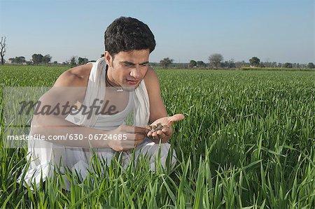 Farmer examining the soil of the field, Sonipat, Haryana, India