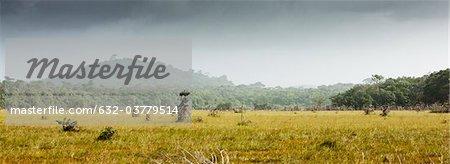 South America, Amazonia, grassy meadow