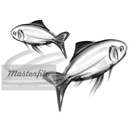 Pisces astrological sign, illustration