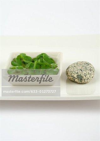 Aquatic plant and stone on tray