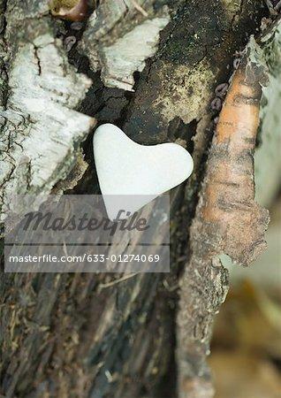 Heart shaped stone on bark
