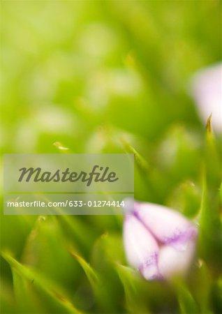 Bromeliad, extreme close-up