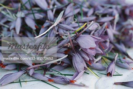 Fresh crocus flowers
