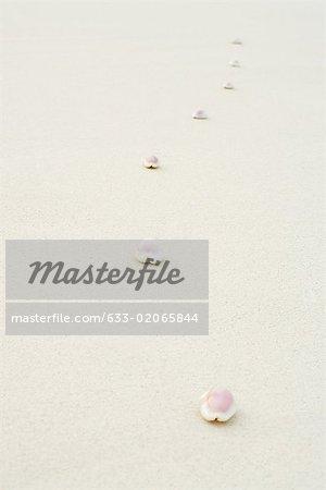 Cowrie seashells (Cypraeidae) lined up on the beach, close-up