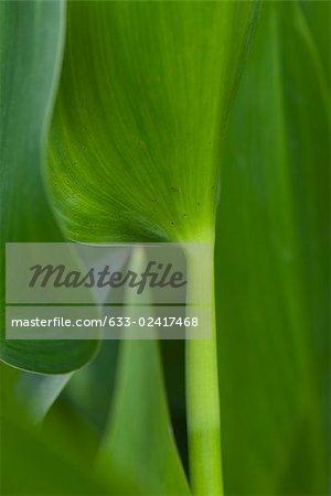 Lush green plant, close-up