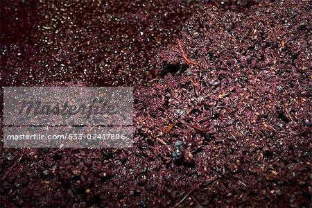 Crushed wine grapes, full frame