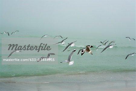Gulls flying over beach