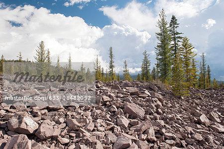 Volcanic rocks and evergreen trees in Lassen Volcanic National Park, California, USA