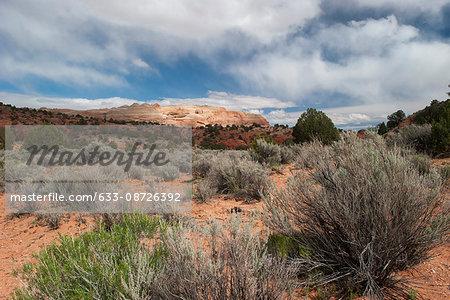 Scenic desert landscape, Utah, USA