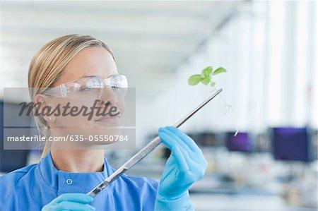 Scientist examining plant in lab