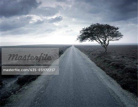 Dirt road stretching through rural landscape