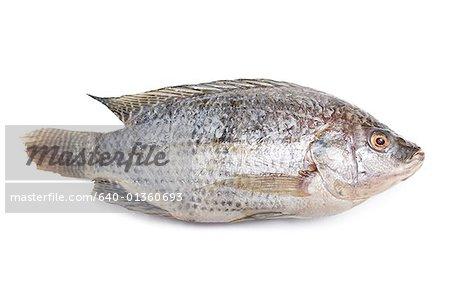 Close-up of a fish