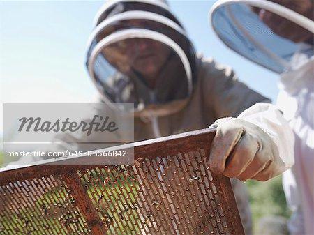 Beekeeper lifts queen bee excluder mesh